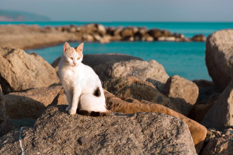 A black and white stray cat sitting on a rock near the turquoise sea. Sunset light stock images