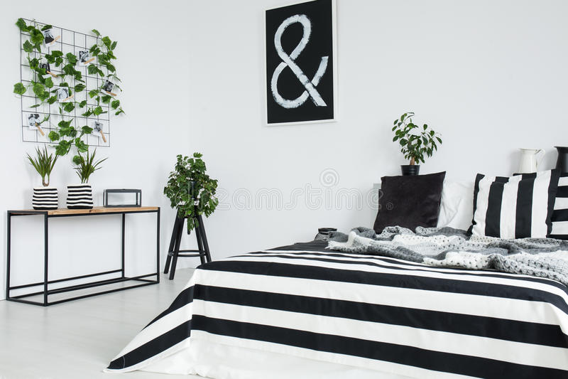 Black, white and striped pillow. On king-size bed with grey blanket in bright bedroom with black picture stock image