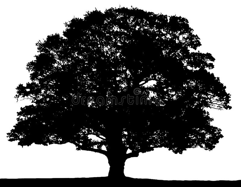 Black and white summer tree silhouette. stock illustration