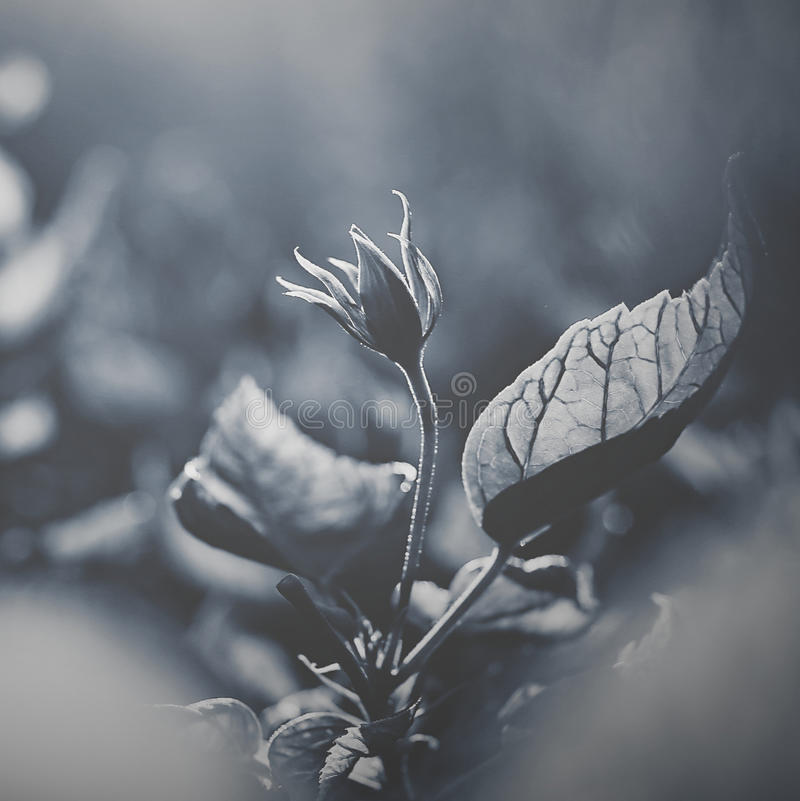 Black and white sunset sunshine flower plant artistic flower. Bule style quiet feeling royalty free stock photography