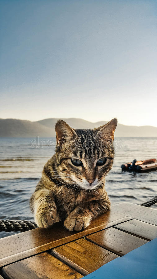 Black and White Tabby Cat Leaning on Brown Wooden Surface Beside Sea stock images