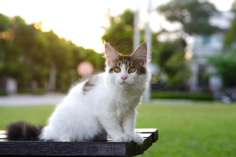 Black and white tabby kitten sitting on a wooden chair outdoor stock photo