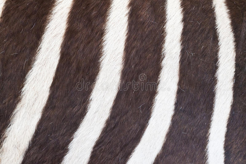 Download Black And White Texture Of Zebra Skin Stock Photo - Image: 24643850