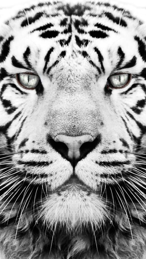 Black and white tiger pattern wallpaper. Black and white tiger face pattern wallpaper, ratio to fit mobile / cell screen background royalty free stock image