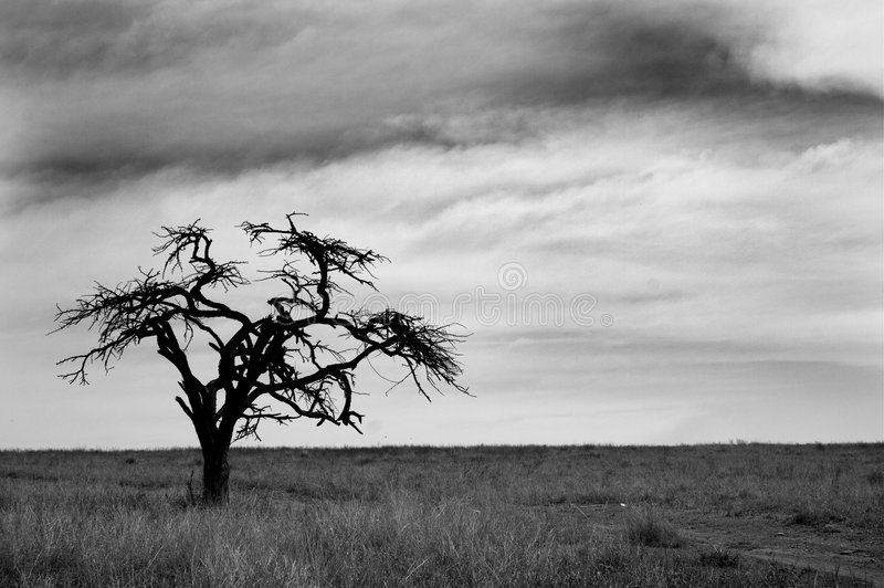 Black and white tree royalty free stock photography