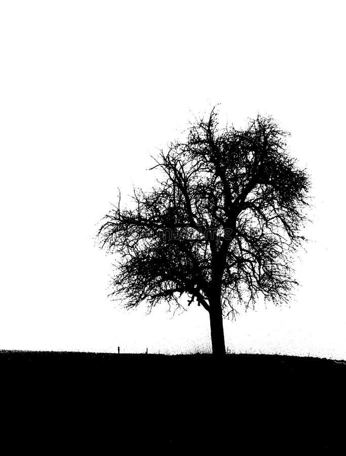 Black and white tree royalty free illustration