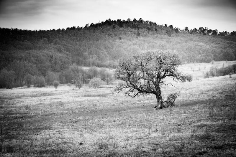 Black and white tree landscape and mountain silhouette royalty free stock image