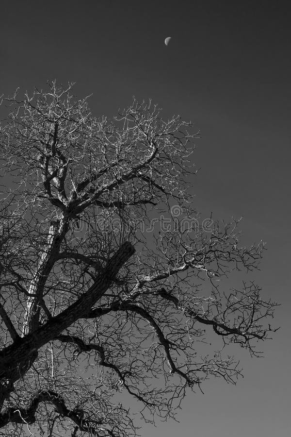 Tree and moon stock images