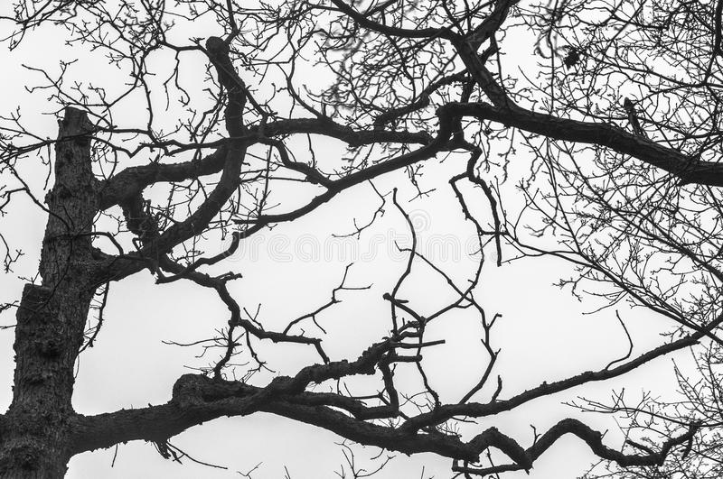 Black and white tree silhouette royalty free stock photos