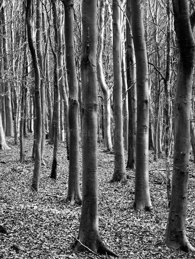 Black and white trees royalty free stock photos