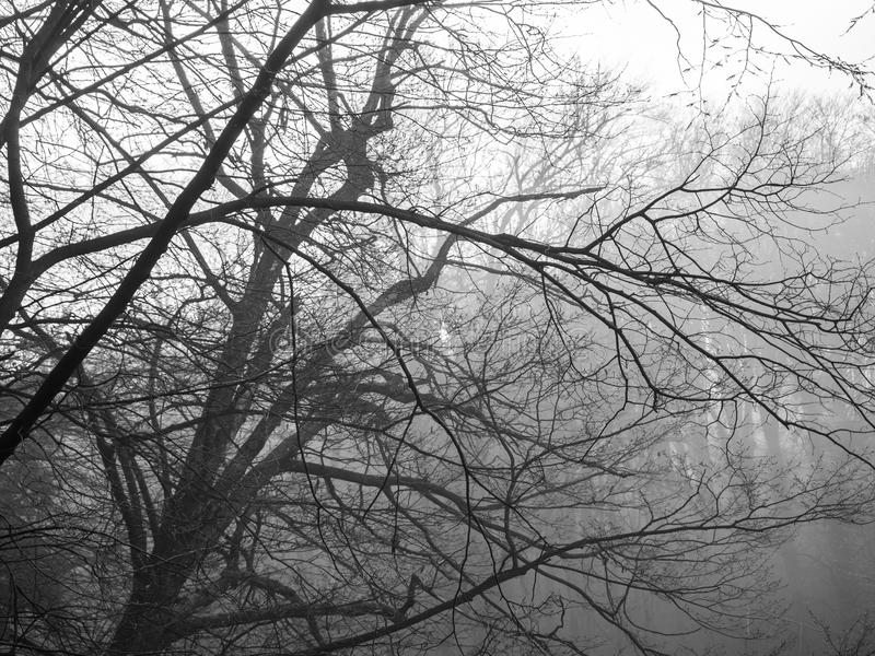 Black and white trees in fog. stock photography