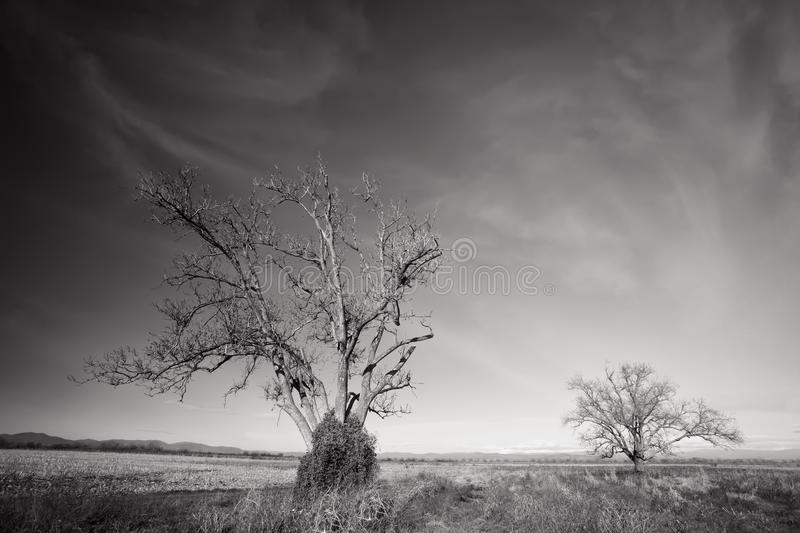 Black and white trees stock photos
