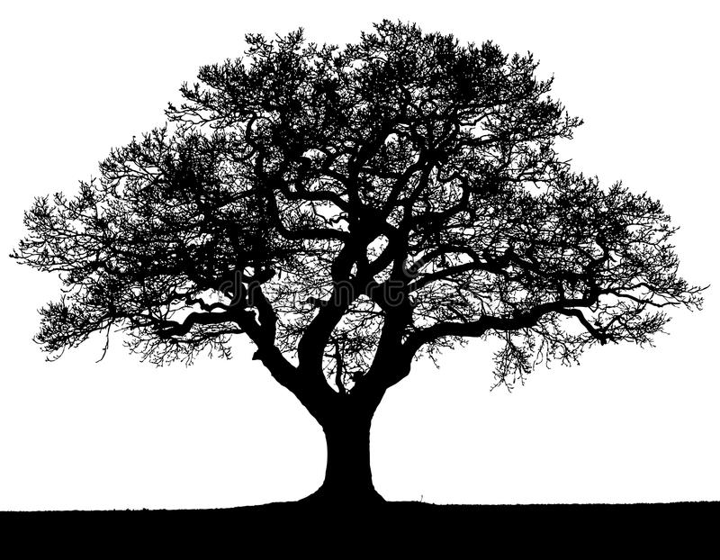 Black and white vector autumn tree silhouette. stock illustration