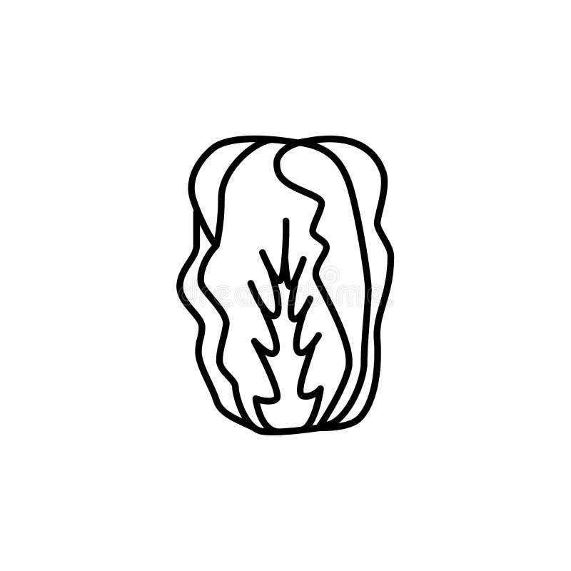 Black & white vector illustration of chinese cabbage. Leaf vegetable. Line icon of fresh organic napa cabbage. Vegan & vegetarian royalty free illustration