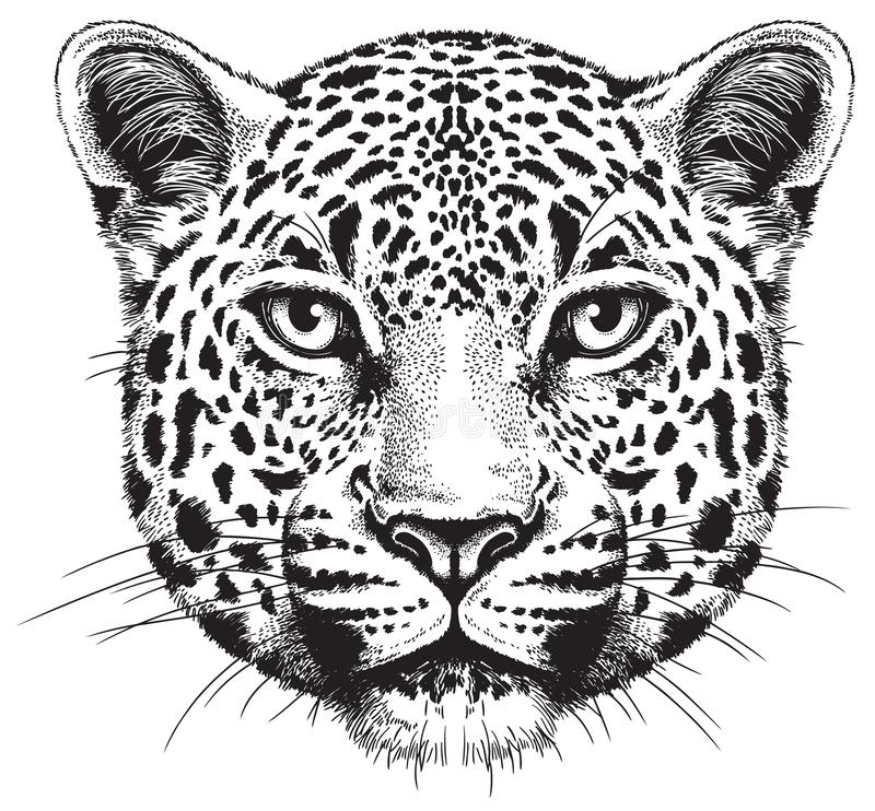 Black and white vector sketch of a leopard`s face vector illustration