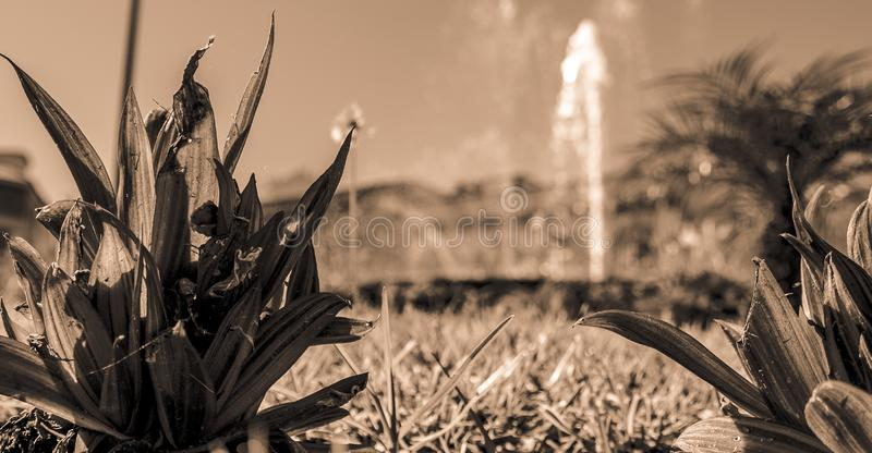Black and white view to a fountain stock photography