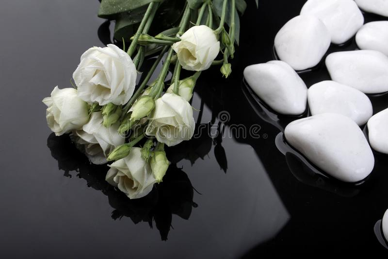 Wet drops on a black background, black and white stones, plantsflowers and stones on the water royalty free stock photo