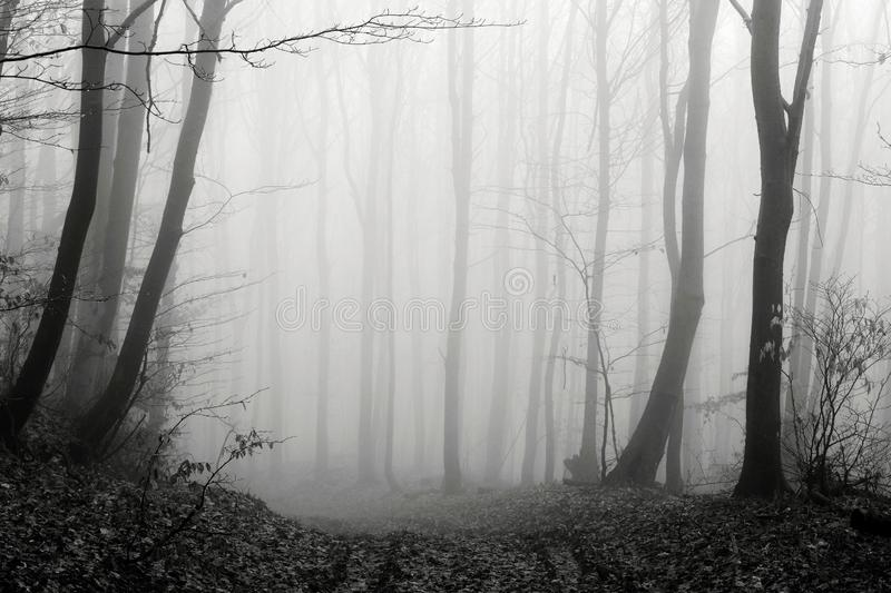 Black and white winter forest, foggy background, leftover leaves on branches and ground. Black and white winter forest, no snow, foggy background, leftover royalty free stock images
