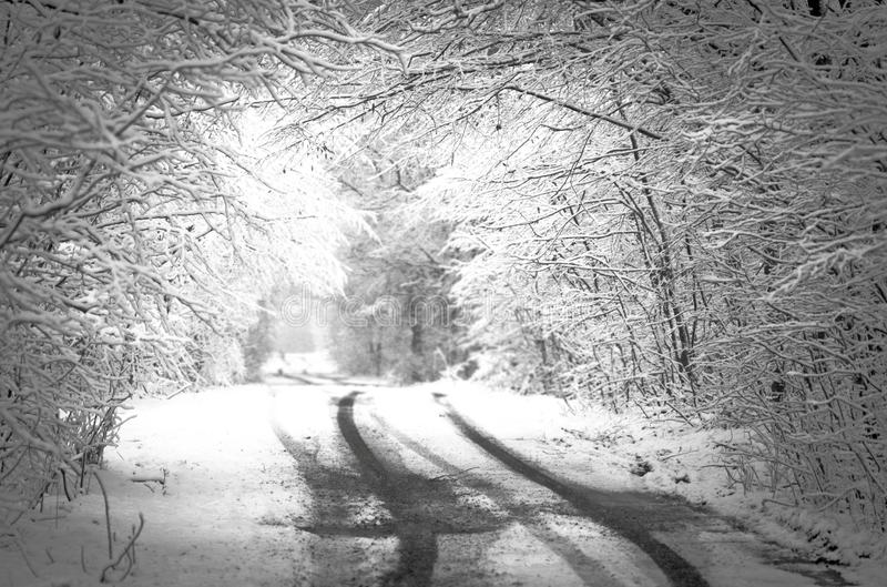 Winter snow forest. Black and white photo. Space for text. Black and white winter landscape. Black and white winter photography. Snowstorm in park royalty free stock photos
