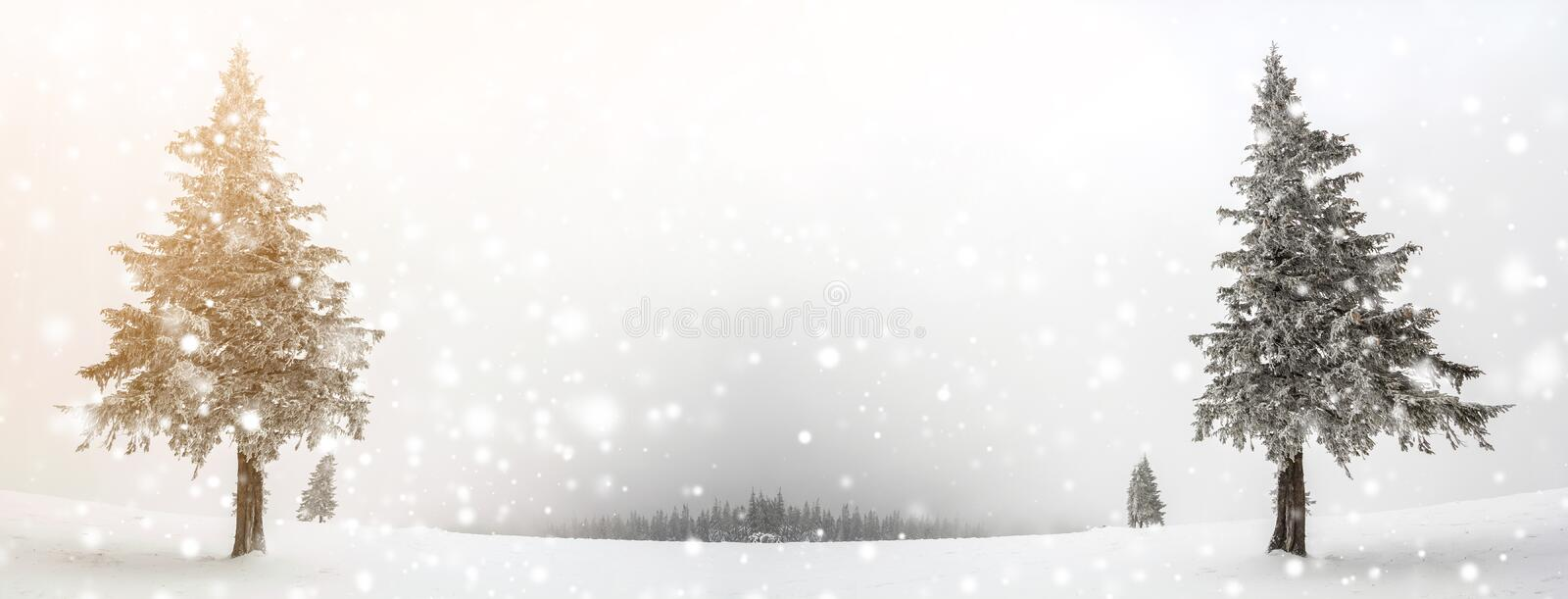 Black and white winter mountain New Year Christmas landscape. Is. Olated alone tall fir-tree covered with frost in deep clear snow on copy space background of stock photo