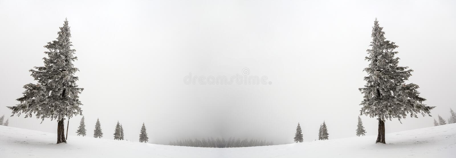 Black and white winter mountain New Year Christmas landscape. Is. Olated alone tall fir-tree covered with frost in deep clear snow on copy space background of stock photos