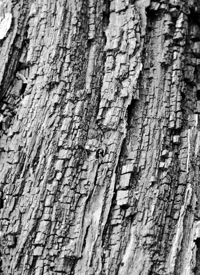 Wooden pattern on a tree. Black and white wooden pattern on a tree stock images