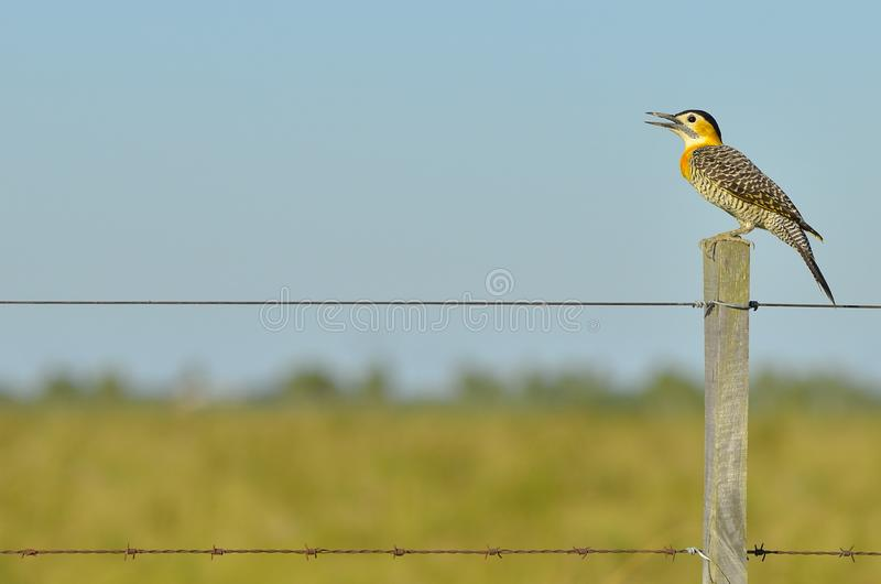 Black White Yellow and Gray Bird Standing on Brown Wooden Fence during Daytime stock photography