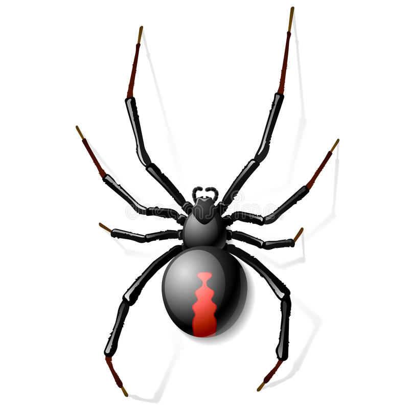 Free Black Widow Spider Royalty Free Stock Photography - 26394757