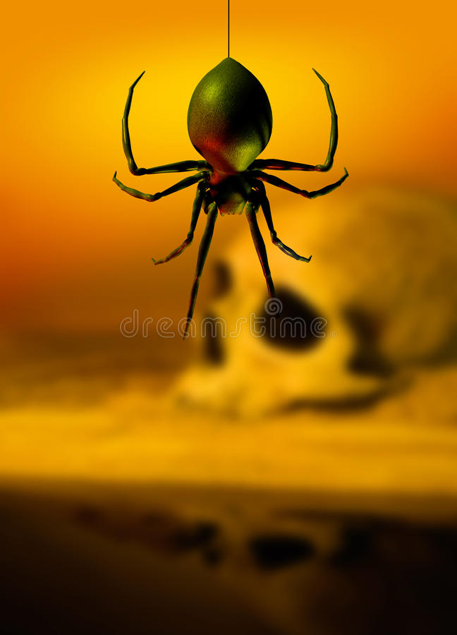 Black widow spider and skull stock images