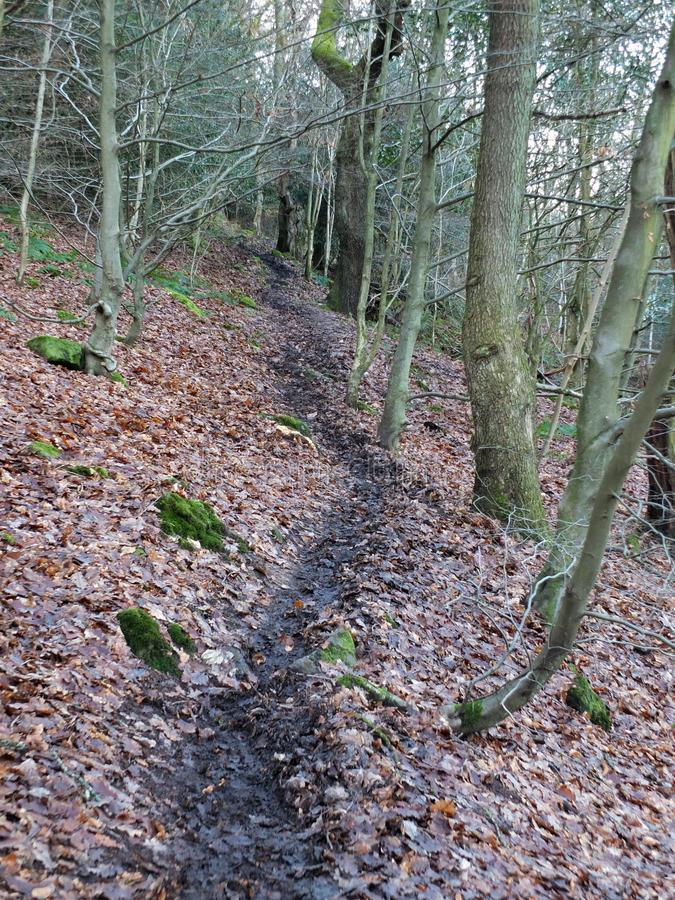 Black winding winter forest pathway on a hillside in dark winter. Black winding winter forest pathway on a hillside on a dark winters day with dense woodland stock photos