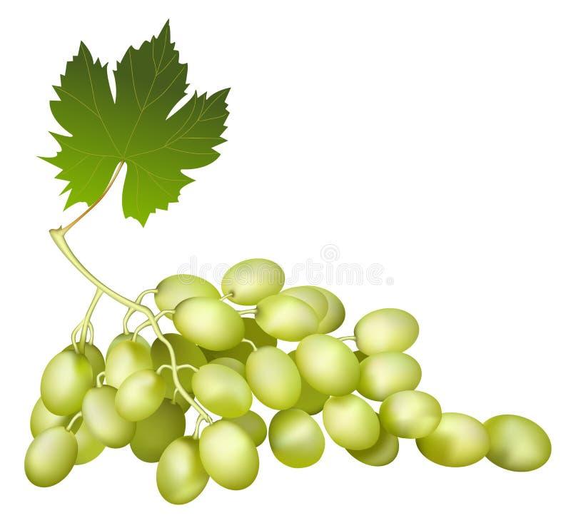 Black Wine Grape Stock Photography