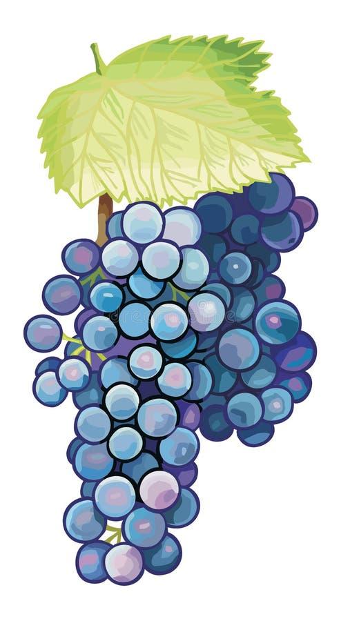 Download Black wine grape stock illustration. Image of nature - 30324453