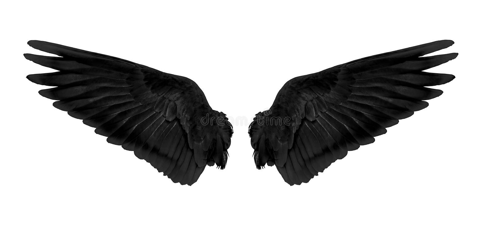 Black wings isolated on white background stock photos