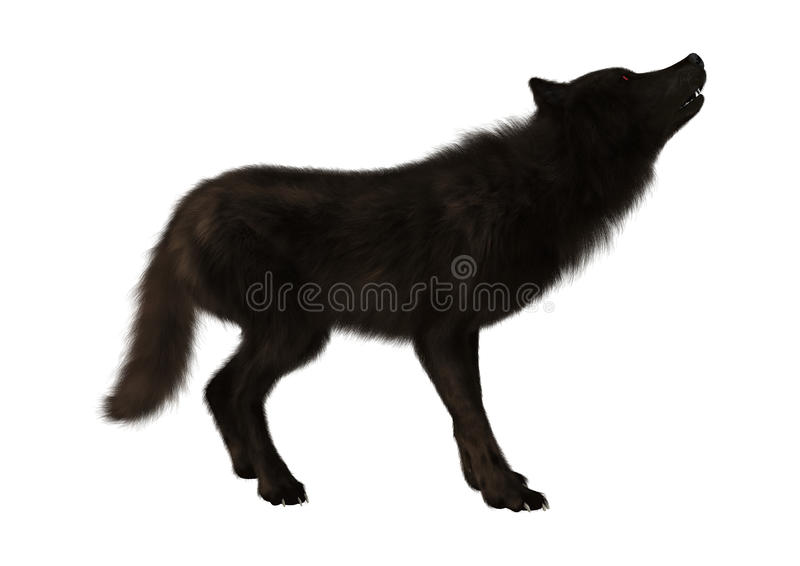 Black Wolf on White royalty free stock photos