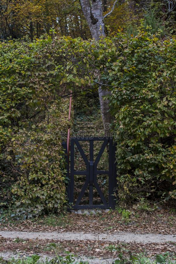 Black Wooden Forest Gate. Black painted wooden gate in front of a staircase that is leading into the forest. The gate is covered in green and yellow leafed royalty free stock photo
