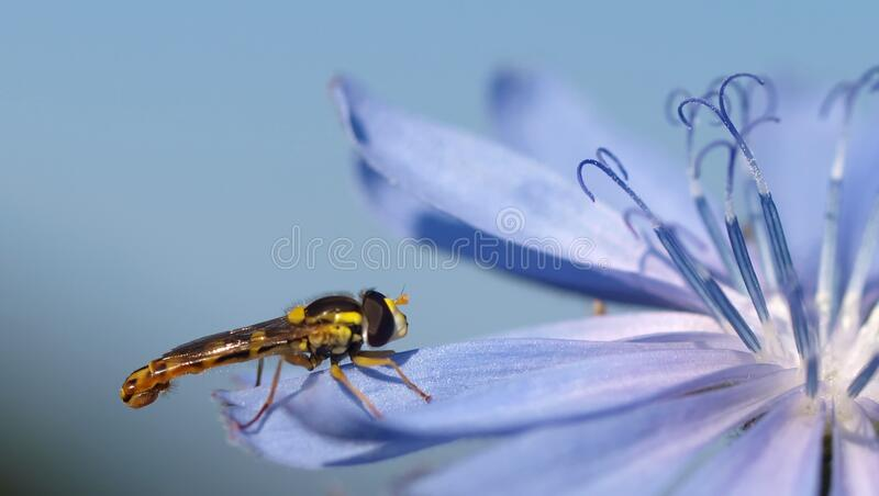 Black and Yellow Dragon Fly on Purple Flower royalty free stock photos
