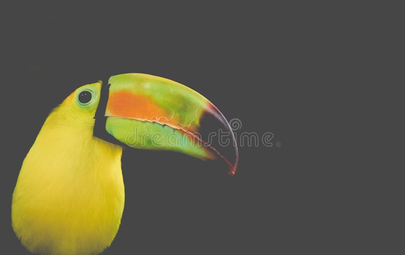 Black and Yellow Long-beak Bird Photo royalty free stock photo