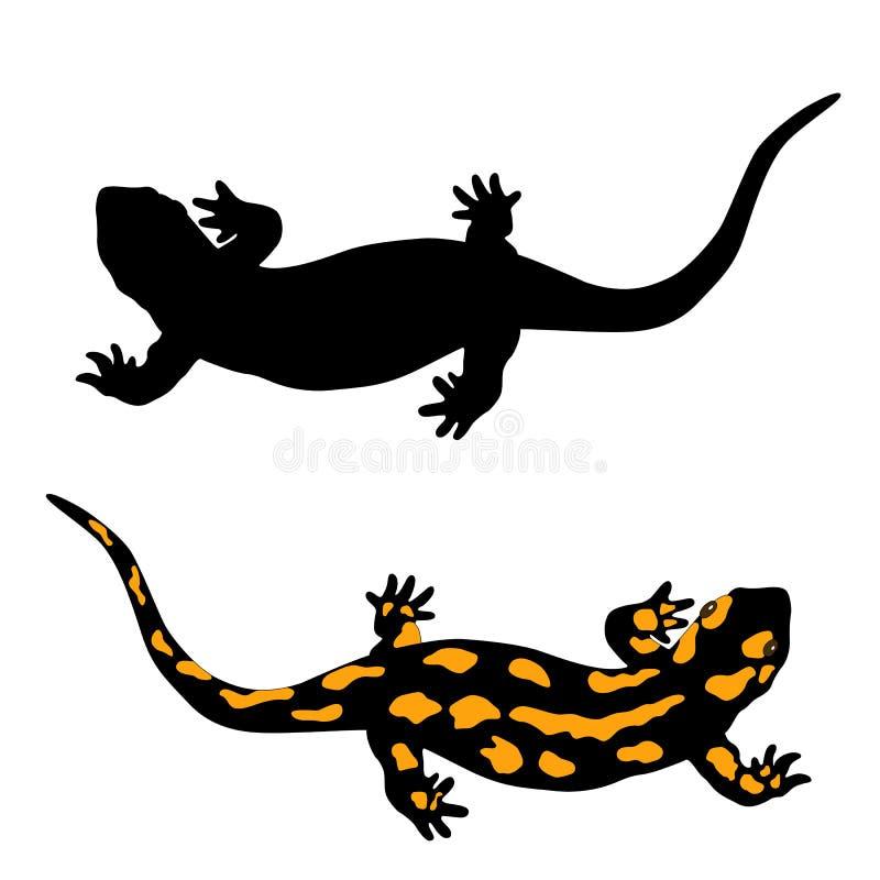 Frog Anatomy Stock Vector  Illustration Of Population