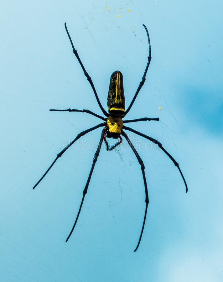 Black And Yellow Spider Free Public Domain Cc0 Image