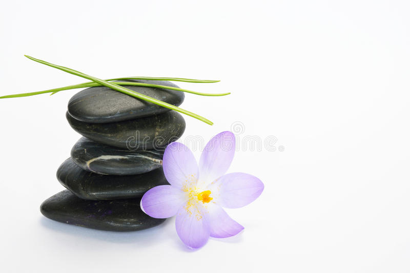 Black zen stones with bamboo en crocus on empty white background stock photos