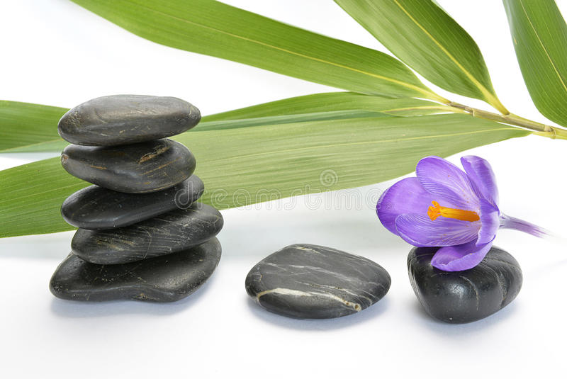 Black zen stones with bamboo en crocus on empty white background stock images