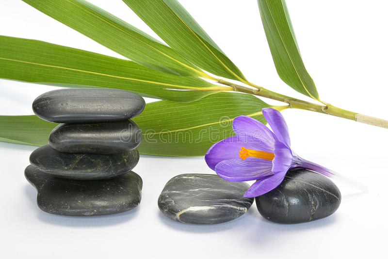 Black zen stones with bamboo en crocus on empty white background. Grey black cairn zen stones with purple spring saffron crocus and bamboo twig on white empty stock photo