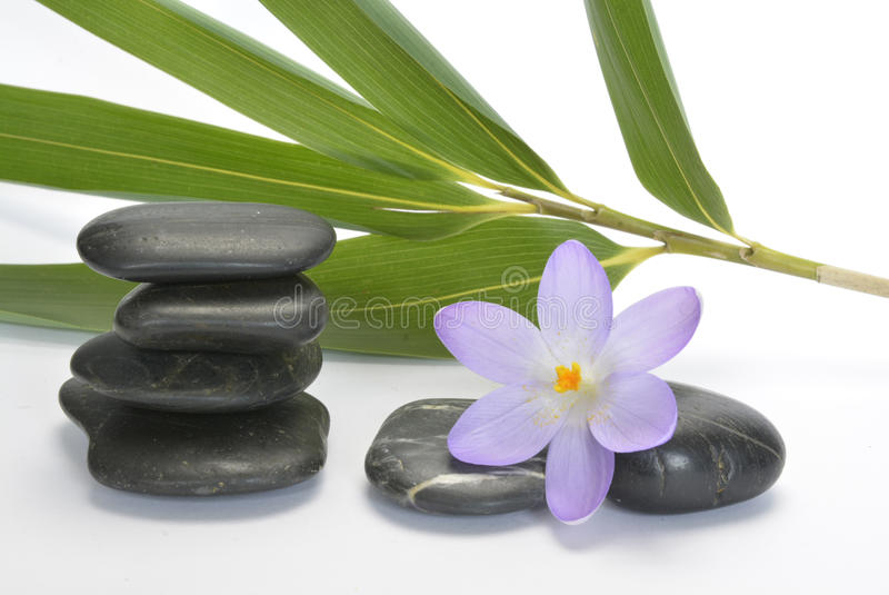 Black zen stones with bamboo en crocus on empty white background stock photography