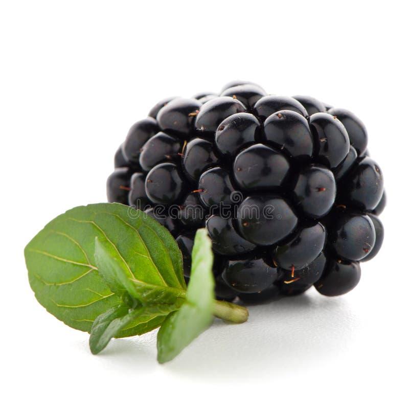 Download Blackberrie Avec La Feuille Photo stock - Image du isolement, dewberry: 76090416