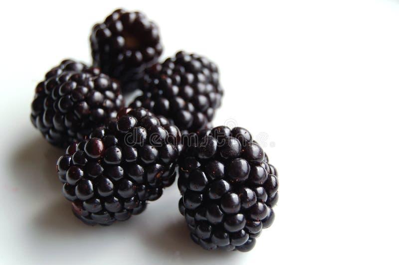 Download Blackberries stock image. Image of blackberry, berry, blackberries - 1417469