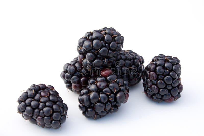 Download Blackberries stock photo. Image of fruit, black, diet - 16632474