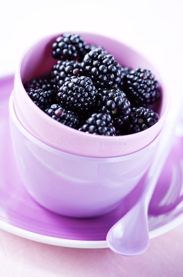Blackberries Royalty Free Stock Images
