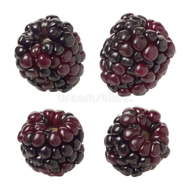 Blackberries. Isolated on a white background. Isolation is on a transparent layer in the PNG format royalty free stock images