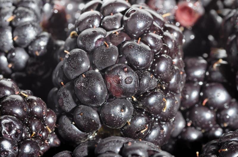 Download Blackberries stock image. Image of black, berry, closeup - 25290499