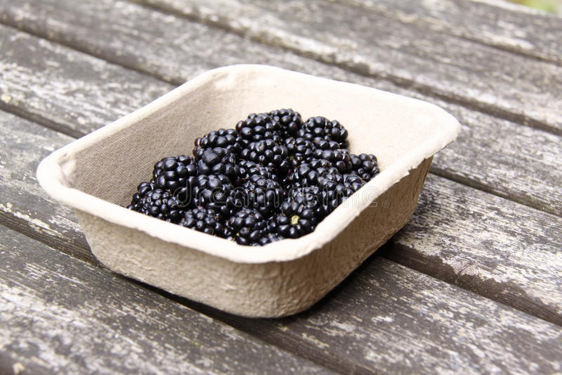Download Blackberries stock photo. Image of food, health, ingredient - 27066852